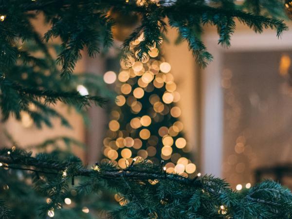 Kerstbomen & oliebollen verkoop